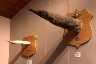 Iceland_Phallus_Museum_Exhibit_333x222